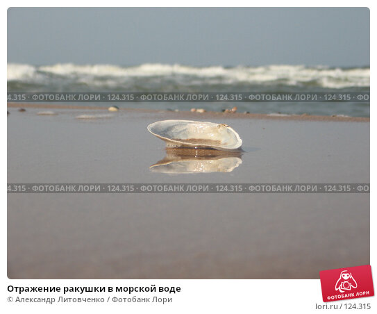 Отражение ракушки в морской воде, фото № 124315, снято 5 сентября 2007 г. (c) Александр Литовченко / Фотобанк Лори