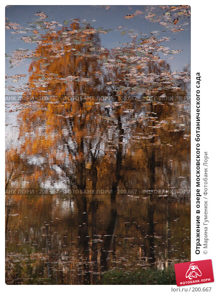 Купить «Отражение в озере московского ботанического сада», фото № 200667, снято 17 октября 2006 г. (c) Марина Гуменюк / Фотобанк Лори