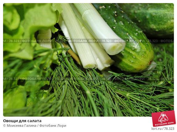 Купить «Овощи для салата», фото № 78323, снято 8 июля 2006 г. (c) Моисеева Галина / Фотобанк Лори