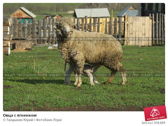Купить «Овца с ягненком», фото № 318691, снято 24 мая 2008 г. (c) Талдыкин Юрий / Фотобанк Лори