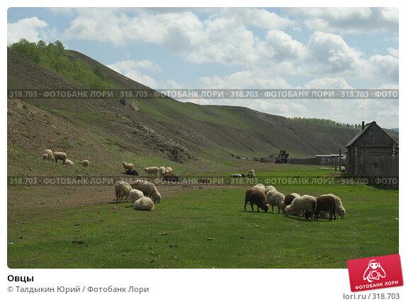 Овцы, фото № 318703, снято 24 мая 2008 г. (c) Талдыкин Юрий / Фотобанк Лори