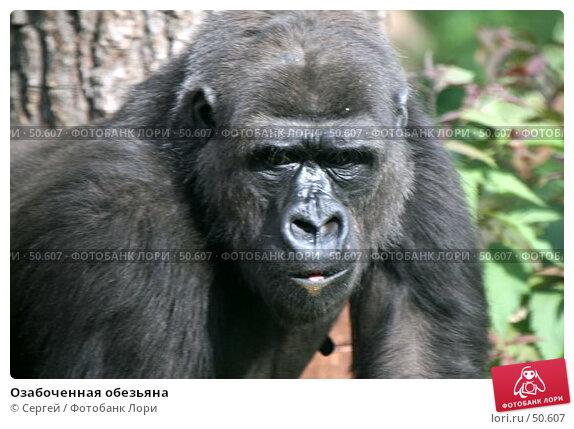 Озабоченная обезьяна, фото № 50607, снято 6 июня 2007 г. (c) Сергей / Фотобанк Лори