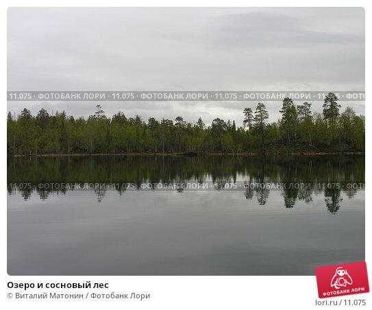Озеро и сосновый лес, фото № 11075, снято 3 июня 2006 г. (c) Виталий Матонин / Фотобанк Лори