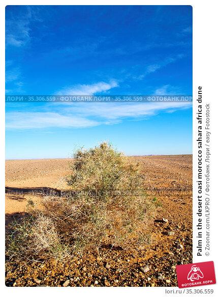 Palm in the desert oasi morocco sahara africa dune. Стоковое фото, фотограф Zoonar.com/LKPRO / easy Fotostock / Фотобанк Лори