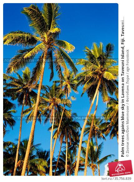 Palm trees agains blue sky in Lavena on Taveuni Island, Fiji. Taveuni... Стоковое фото, фотограф Zoonar.com/Don Mammoser / age Fotostock / Фотобанк Лори