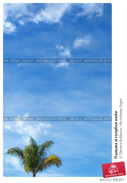 Пальма и голубое небо, фото № 169411, снято 4 января 2008 г. (c) Tamara Kulikova / Фотобанк Лори