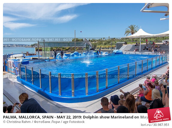 Купить «PALMA, MALLORCA, SPAIN - MAY 22, 2019: Dolphin show Marineland on May 22, 2019 in Palma, Mallorca, Spain.», фото № 30987951, снято 22 мая 2019 г. (c) age Fotostock / Фотобанк Лори
