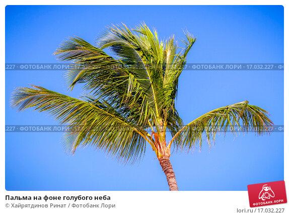 Купить «Пальма на фоне голубого неба», эксклюзивное фото № 17032227, снято 15 декабря 2013 г. (c) Хайрятдинов Ринат / Фотобанк Лори