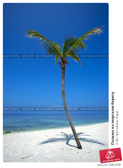 Пальма на морском берегу, фото № 335579, снято 26 мая 2017 г. (c) Михаил / Фотобанк Лори
