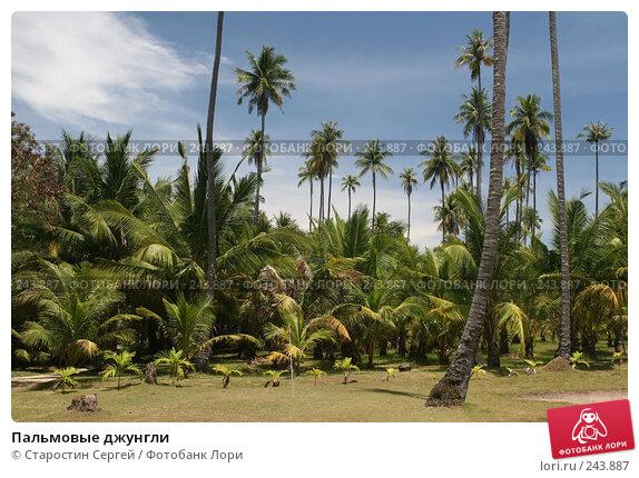 Пальмовые джунгли, фото № 243887, снято 24 марта 2008 г. (c) Старостин Сергей / Фотобанк Лори