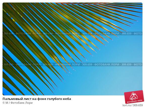 Пальмовый лист на фоне голубого неба, фото № 309659, снято 22 июля 2017 г. (c) Михаил / Фотобанк Лори