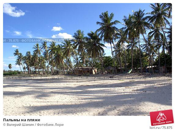 Пальмы на пляже, фото № 75875, снято 30 мая 2007 г. (c) Валерий Шанин / Фотобанк Лори