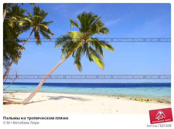 Пальмы на тропическом пляже, фото № 327039, снято 25 мая 2017 г. (c) Михаил / Фотобанк Лори