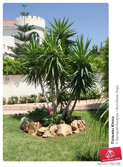 Пальмы Юкка, фото № 152195, снято 5 августа 2007 г. (c) Валерий Торопов / Фотобанк Лори