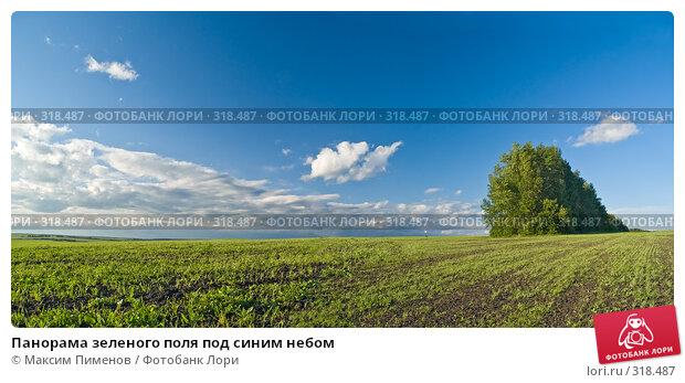 Панорама зеленого поля под синим небом, фото № 318487, снято 8 июня 2007 г. (c) Максим Пименов / Фотобанк Лори