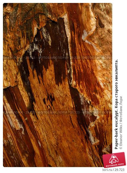 Paper-bark eucalypt. Кора старого эвкалипта., фото № 29723, снято 15 апреля 2007 г. (c) Eleanor Wilks / Фотобанк Лори