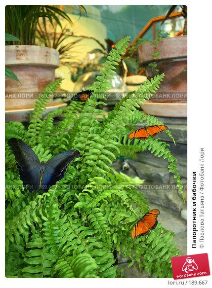 Папоротник и бабочки, фото № 189667, снято 18 декабря 2007 г. (c) Павлова Татьяна / Фотобанк Лори