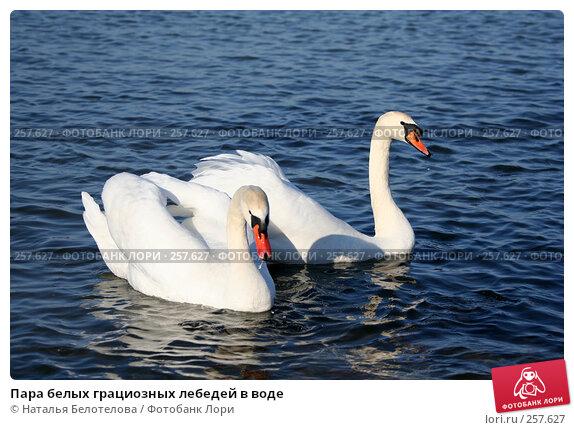 Пара белых грациозных лебедей в воде, фото № 257627, снято 29 марта 2008 г. (c) Наталья Белотелова / Фотобанк Лори