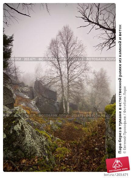 Пара берез в тумане в естественной рамке из камней и веток, фото № 203671, снято 23 августа 2017 г. (c) Евгений Прокофьев / Фотобанк Лори