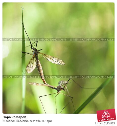 Пара комаров, фото № 123815, снято 25 мая 2007 г. (c) Коваль Василий / Фотобанк Лори