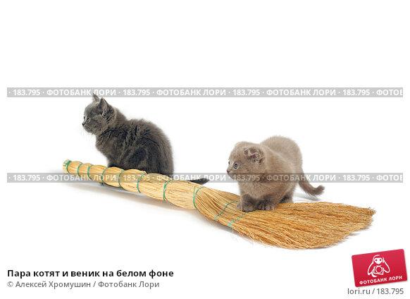 Пара котят и веник на белом фоне, фото № 183795, снято 27 октября 2007 г. (c) Алексей Хромушин / Фотобанк Лори