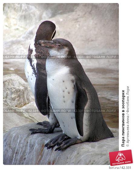 Купить «Пара пингвинов в зоопарке», фото № 42331, снято 21 апреля 2018 г. (c) Артемьева Анна / Фотобанк Лори