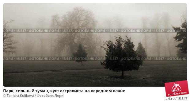 Купить «Парк, сильный туман, куст остролиста на переднем плане», фото № 15547, снято 19 декабря 2006 г. (c) Tamara Kulikova / Фотобанк Лори