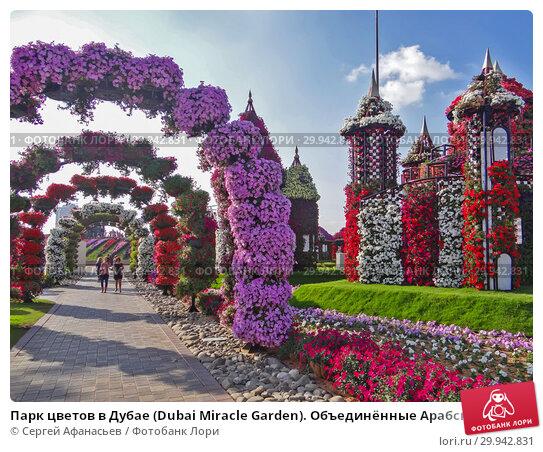 Купить «Парк цветов в Дубае (Dubai Miracle Garden). Объединённые Арабские Эмираты», фото № 29942831, снято 23 декабря 2014 г. (c) Сергей Афанасьев / Фотобанк Лори