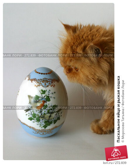 Пасхальное яйцо и рыжая кошка, фото № 272839, снято 20 марта 2006 г. (c) Морозова Татьяна / Фотобанк Лори