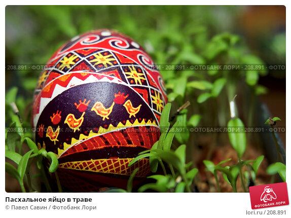 Пасхальное яйцо в траве, фото № 208891, снято 19 февраля 2008 г. (c) Павел Савин / Фотобанк Лори