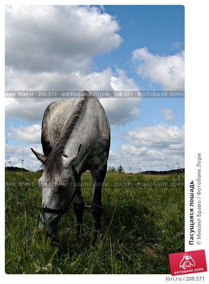 Пасущаяся лошадь, фото № 208571, снято 23 июня 2007 г. (c) Михаил Браво / Фотобанк Лори