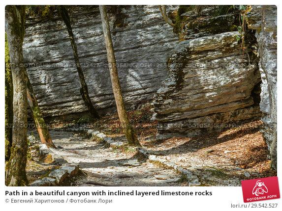 Path in a beautiful canyon with inclined layered limestone rocks. Стоковое фото, фотограф Евгений Харитонов / Фотобанк Лори