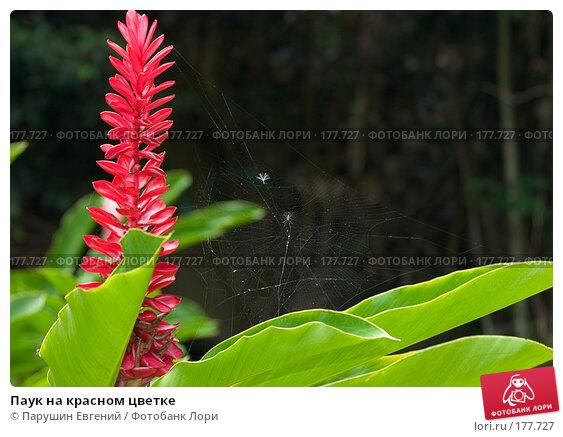 Паук на красном цветке, фото № 177727, снято 23 мая 2017 г. (c) Парушин Евгений / Фотобанк Лори