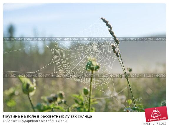 Паутина на поле в рассветных лучах солнца, фото № 134267, снято 15 июля 2007 г. (c) Алексей Судариков / Фотобанк Лори