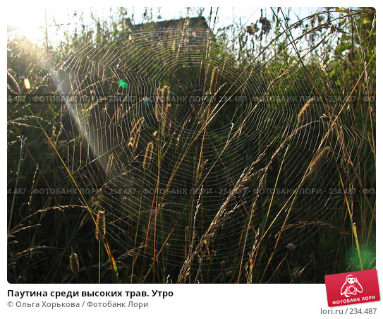Паутина среди высоких трав. Утро, фото № 234487, снято 8 августа 2007 г. (c) Ольга Хорькова / Фотобанк Лори