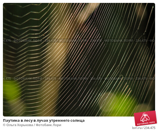 Паутина в лесу в лучах утреннего солнца, фото № 234475, снято 7 августа 2007 г. (c) Ольга Хорькова / Фотобанк Лори