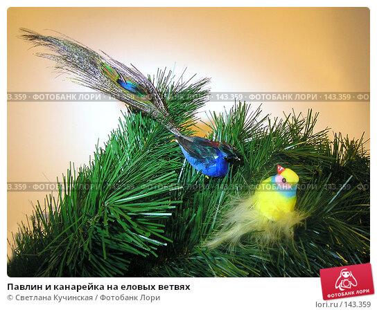 Купить «Павлин и канарейка на еловых ветвях», фото № 143359, снято 23 марта 2018 г. (c) Светлана Кучинская / Фотобанк Лори