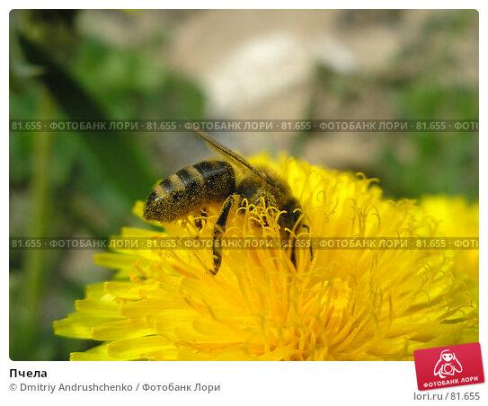 Купить «Пчела», фото № 81655, снято 30 апреля 2007 г. (c) Dmitriy Andrushchenko / Фотобанк Лори