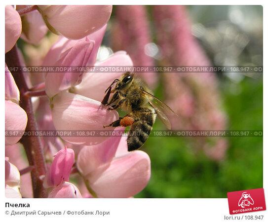 Пчелка, фото № 108947, снято 11 июня 2006 г. (c) Дмитрий Сарычев / Фотобанк Лори