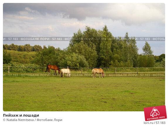 Пейзаж и лошади, эксклюзивное фото № 57183, снято 28 июня 2007 г. (c) Natalia Nemtseva / Фотобанк Лори