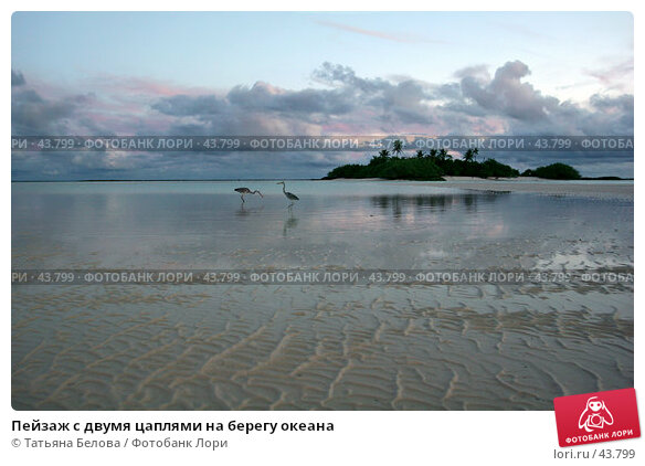 Пейзаж с двумя цаплями на берегу океана, эксклюзивное фото № 43799, снято 23 ноября 2006 г. (c) Татьяна Белова / Фотобанк Лори