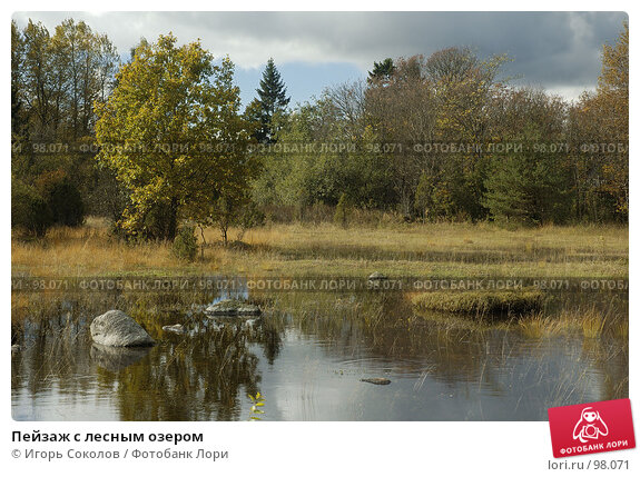 Купить «Пейзаж с лесным озером», фото № 98071, снято 26 апреля 2018 г. (c) Игорь Соколов / Фотобанк Лори