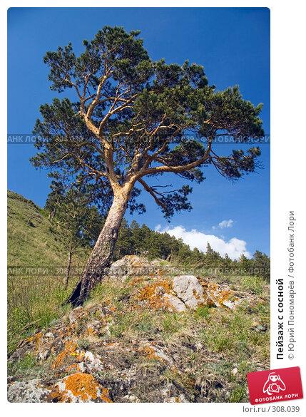 Пейзаж с сосной, фото № 308039, снято 19 мая 2008 г. (c) Юрий Пономарёв / Фотобанк Лори