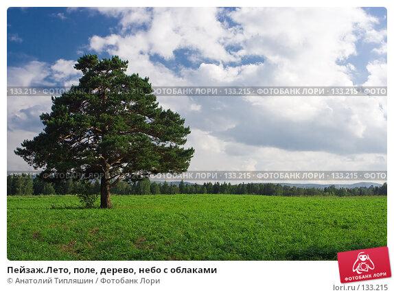 Пейзаж.Лето, поле, дерево, небо с облаками, фото № 133215, снято 4 августа 2007 г. (c) Анатолий Типляшин / Фотобанк Лори