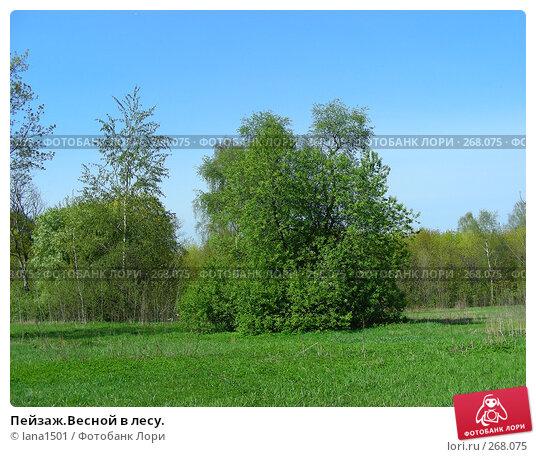 Пейзаж.Весной в лесу., эксклюзивное фото № 268075, снято 29 апреля 2008 г. (c) lana1501 / Фотобанк Лори