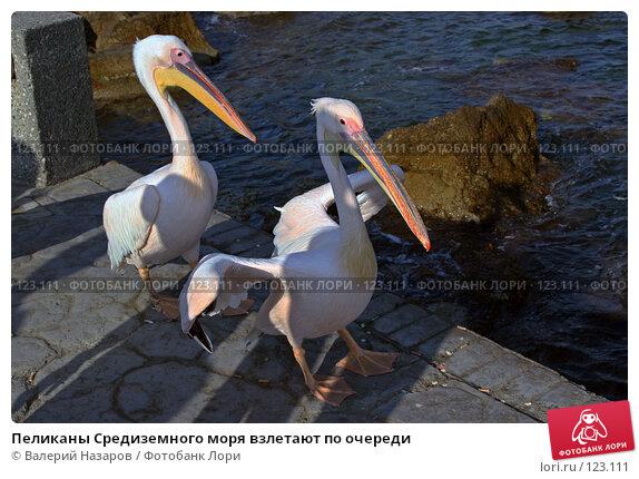 Пеликаны Средиземного моря взлетают по очереди, фото № 123111, снято 21 августа 2007 г. (c) Валерий Торопов / Фотобанк Лори