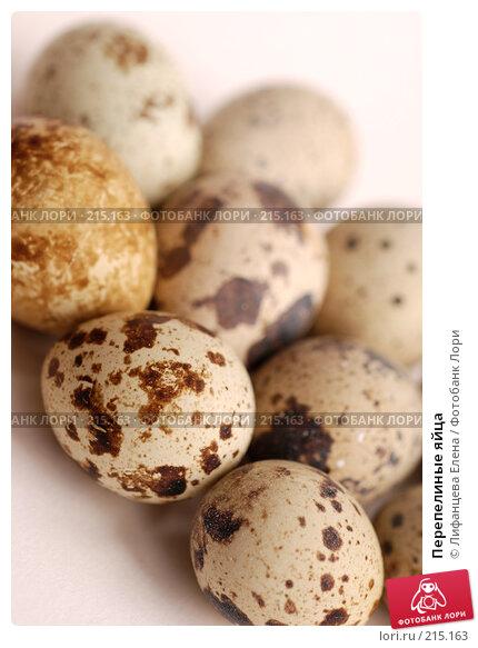Перепелиные яйца, фото № 215163, снято 4 марта 2008 г. (c) Лифанцева Елена / Фотобанк Лори