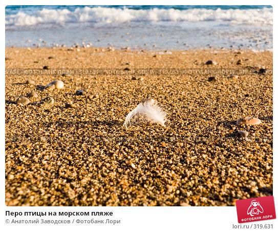 Купить «Перо птицы на морском пляже», фото № 319631, снято 19 сентября 2007 г. (c) Анатолий Заводсков / Фотобанк Лори
