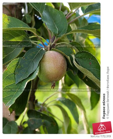Первое яблоко, фото № 172319, снято 17 января 2017 г. (c) Парушин Евгений / Фотобанк Лори