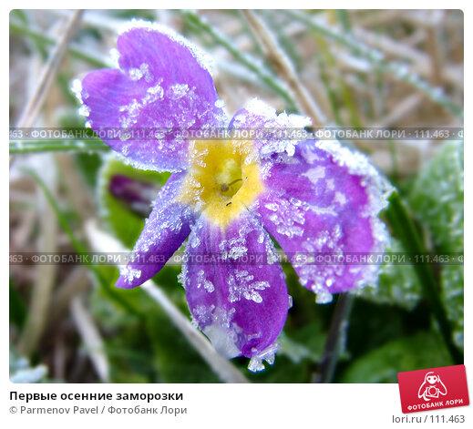 Первые осенние заморозки, фото № 111463, снято 6 мая 2007 г. (c) Parmenov Pavel / Фотобанк Лори